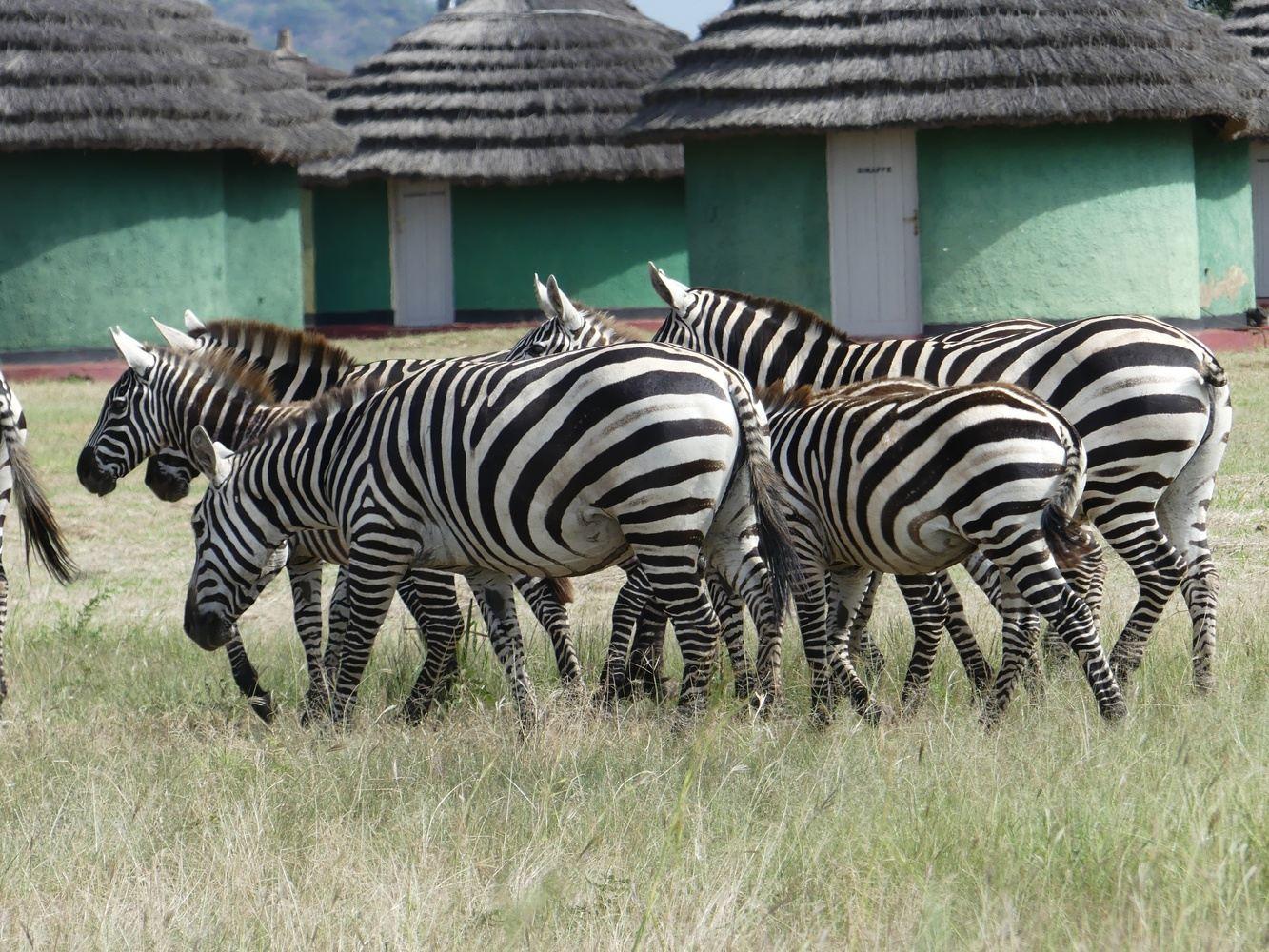 Safari + Wine lands Experience