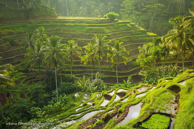 Bali Goddess Retreat