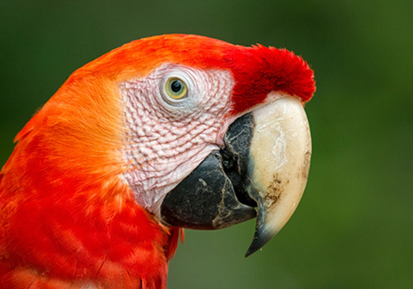 Birdwatching in Peru: Cuzco and Manu Lowlands Tour