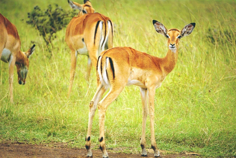 Tanzania Five Days joining Safari