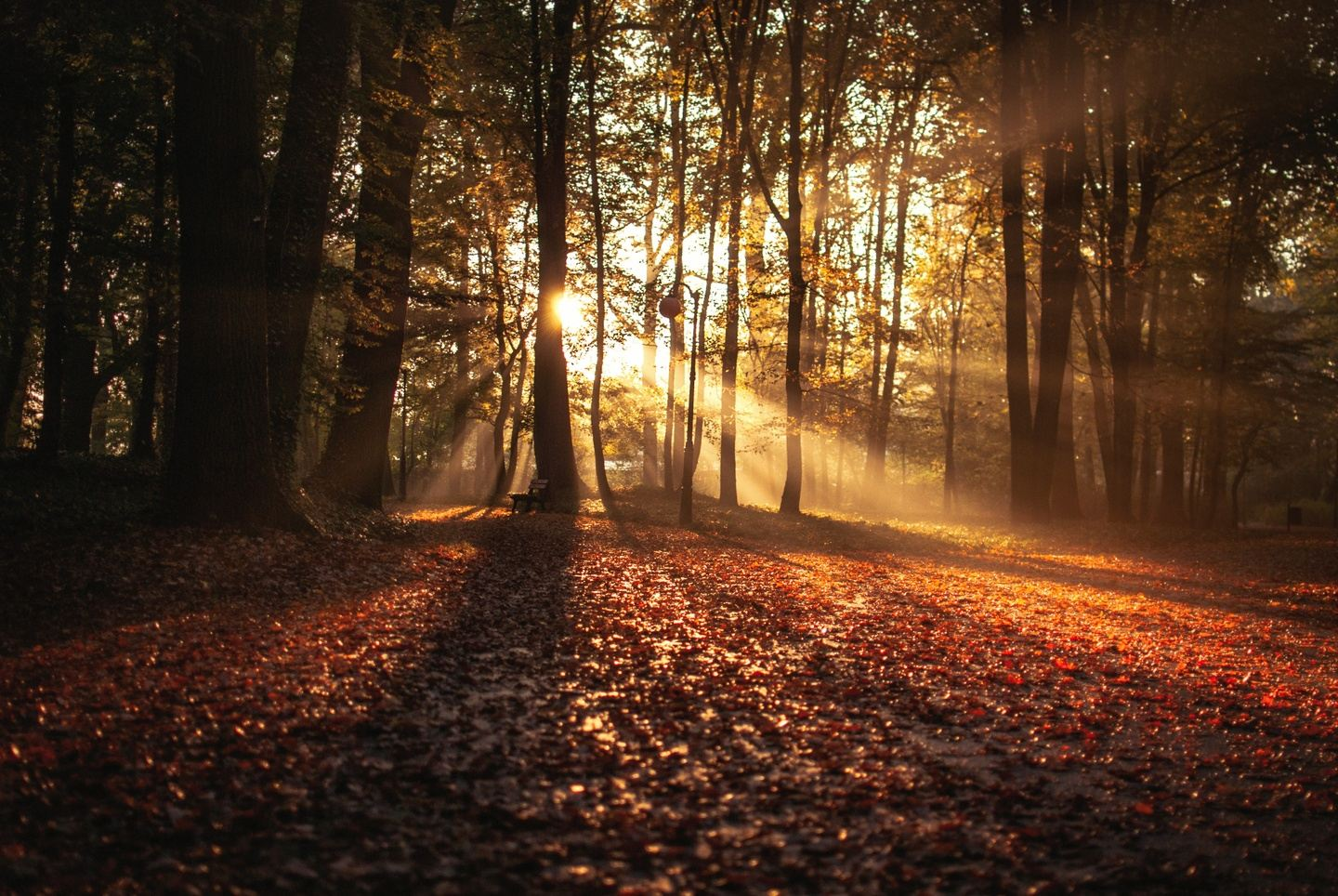 THE CHANGING SEASONS.  . . . A TIME TO REFLECT, NOURISH and TRANSITION