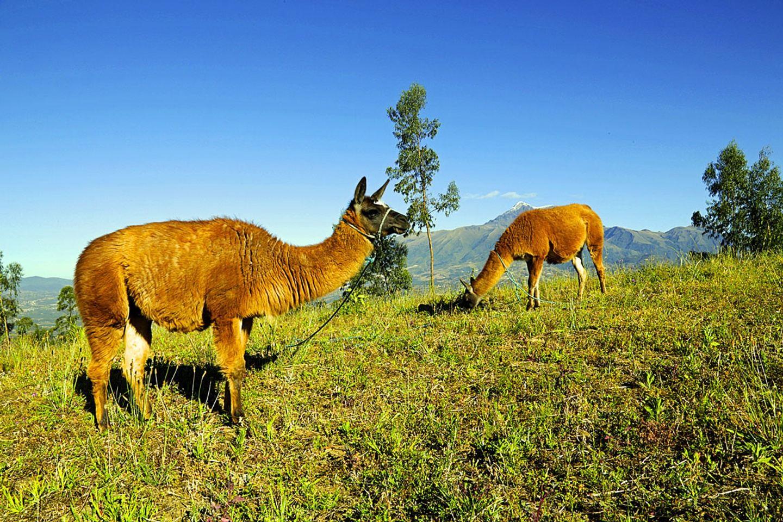 Family Trip near Otavalo