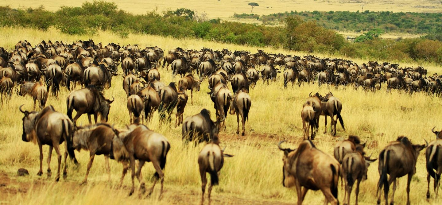 5 DAYS  | The Undiscovered Authentic Trip To Tanzania!