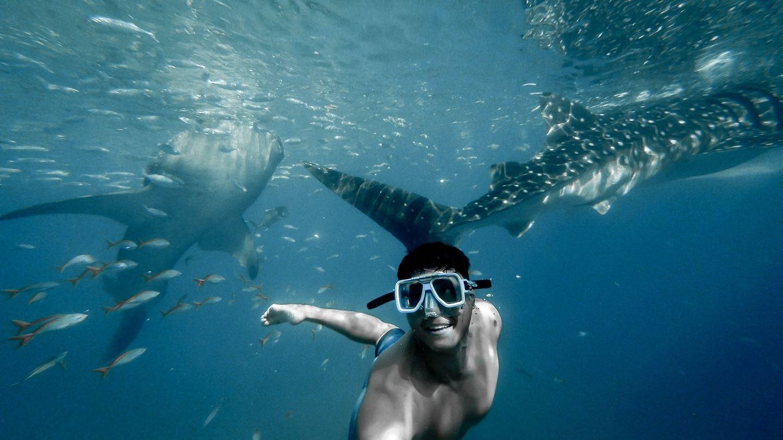 Adelaar Cruises - Whale Shark Special - (Bali - Komodo - Bali)