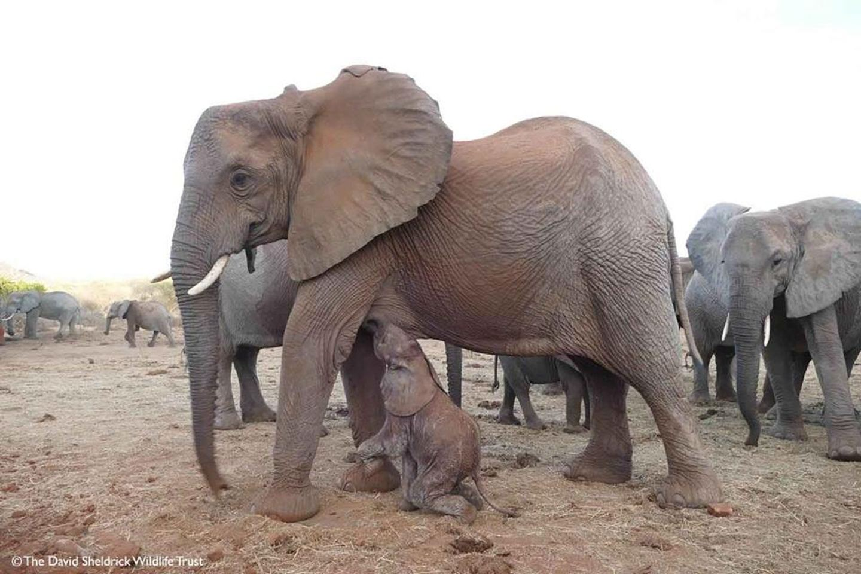 MARCH Big Elephant Magic- Kenya- Safari Magic!