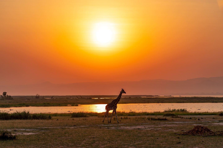 11 Day Luxury Tanzania Wildlife Safari and Zanzibar Beach Holiday