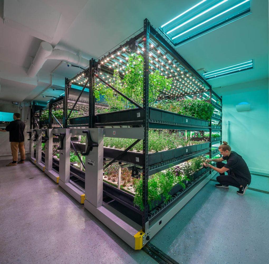 Explore an underground restaurant farm!