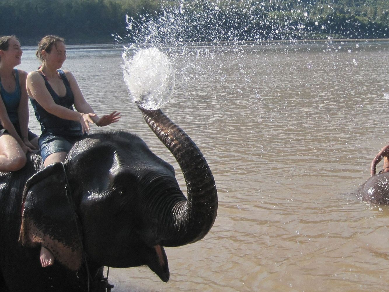 H05 No pickup Elephant Mahout Training course