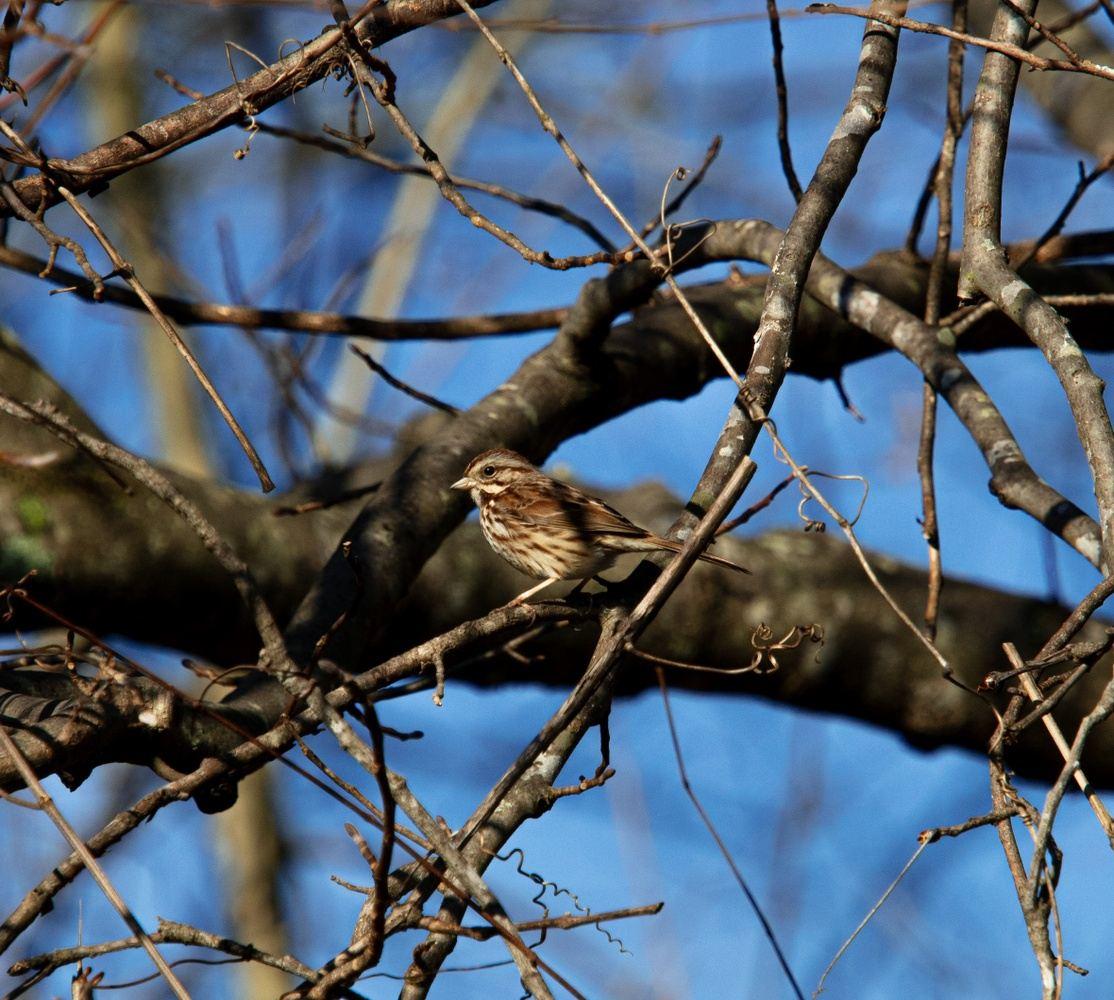 Bird watching at Yates Mill Park