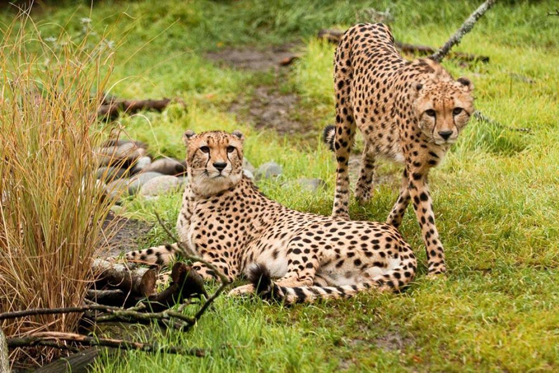 Budget Masai Mara Experience