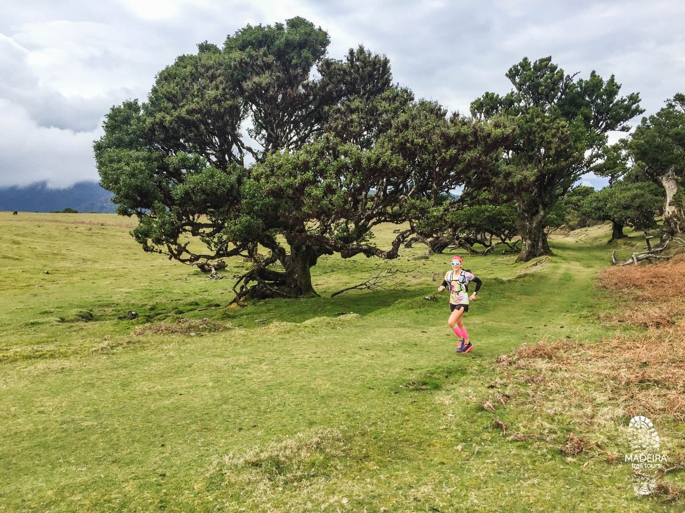Fanal Ancient Forest Running Tour (Easy-Moderate) - SATURDAY