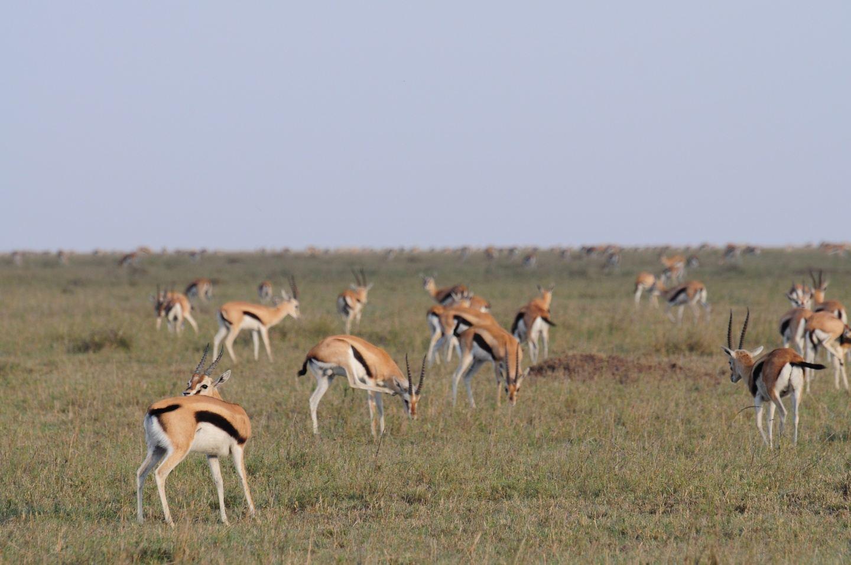 majestic of serengeti