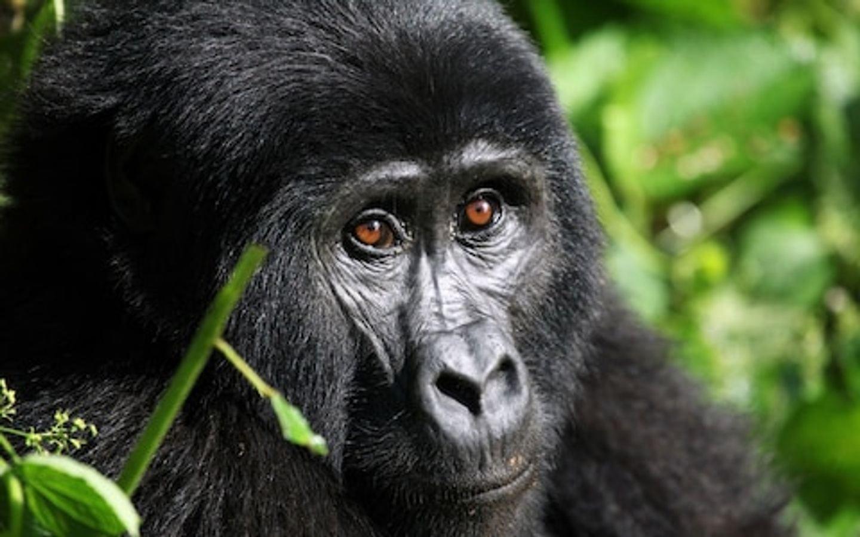 9 Day Rwanda Gorilla Trekking Tour and Tanzania Wildlife Safari