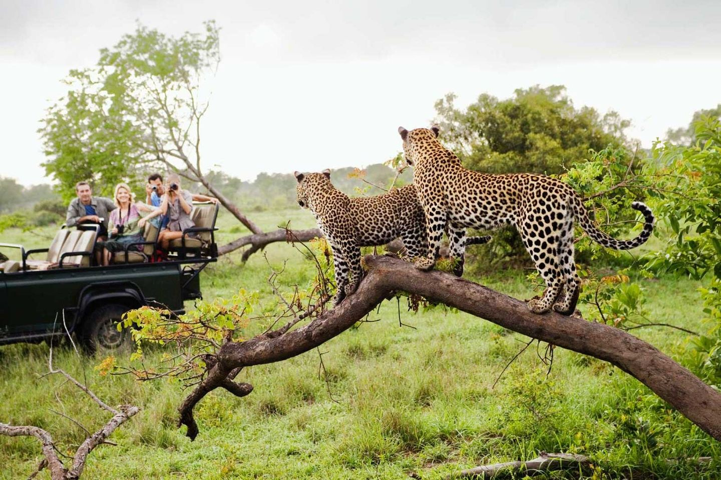 South Africa  - New Year & Christmas Group Departures