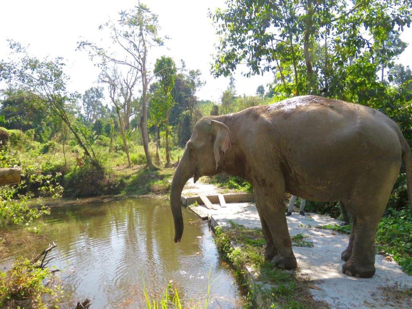 Big Elephant Magic Experience Thailand Dec. 2019