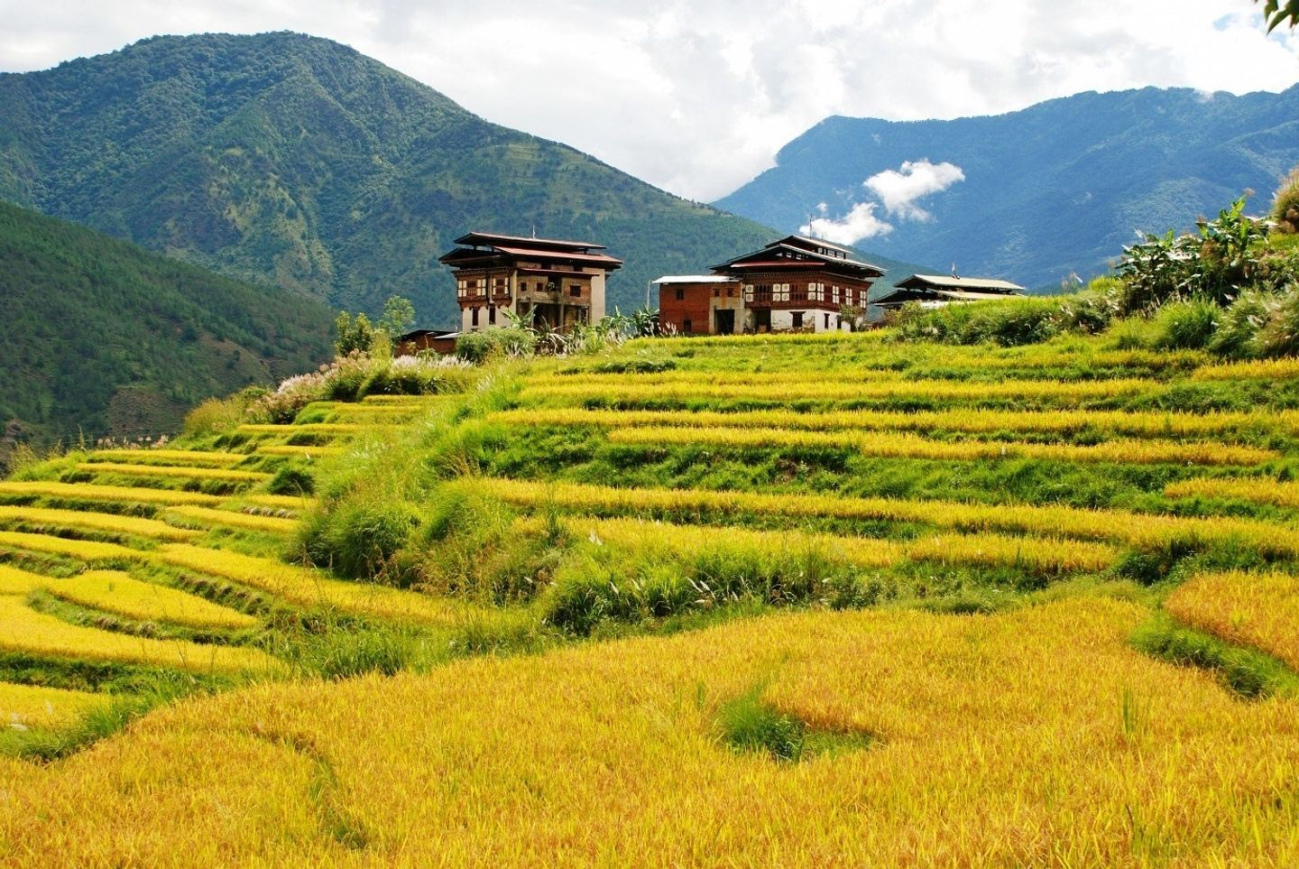 7 Day enchanting Bhutan Tours