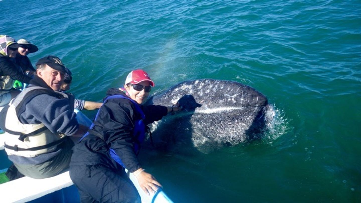 The Friendly Grey Whales of Baja!