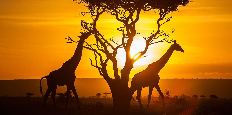 [TEST] Kenya Tour - One Price