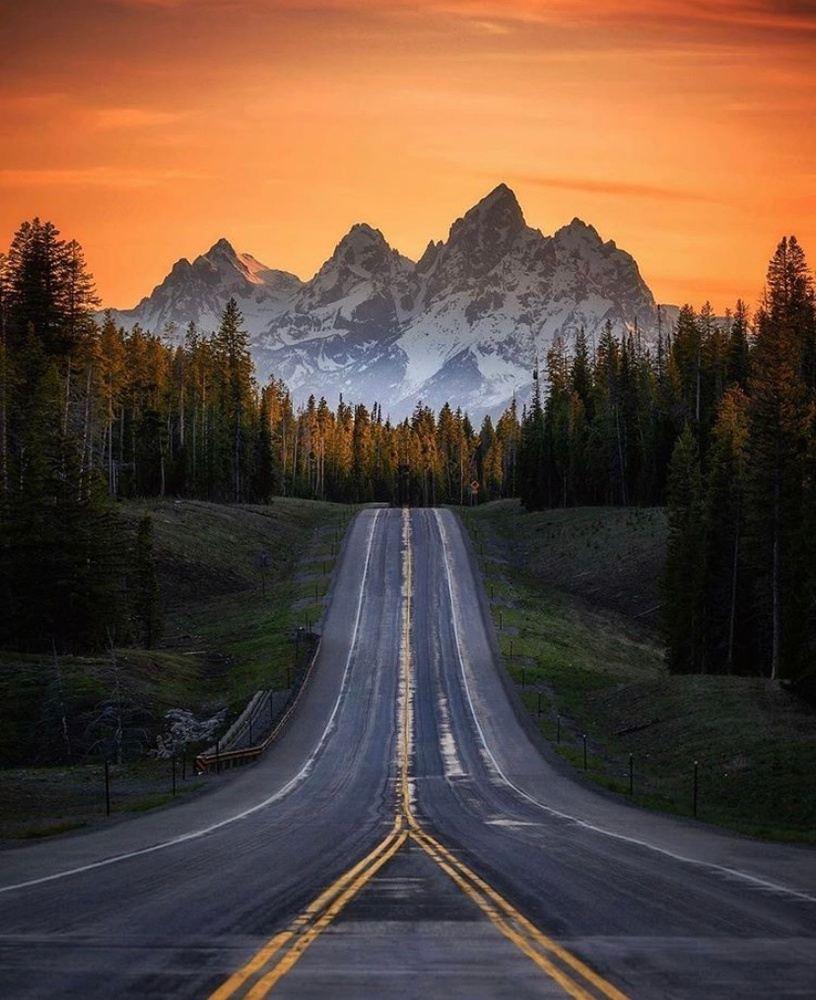 Trip Main