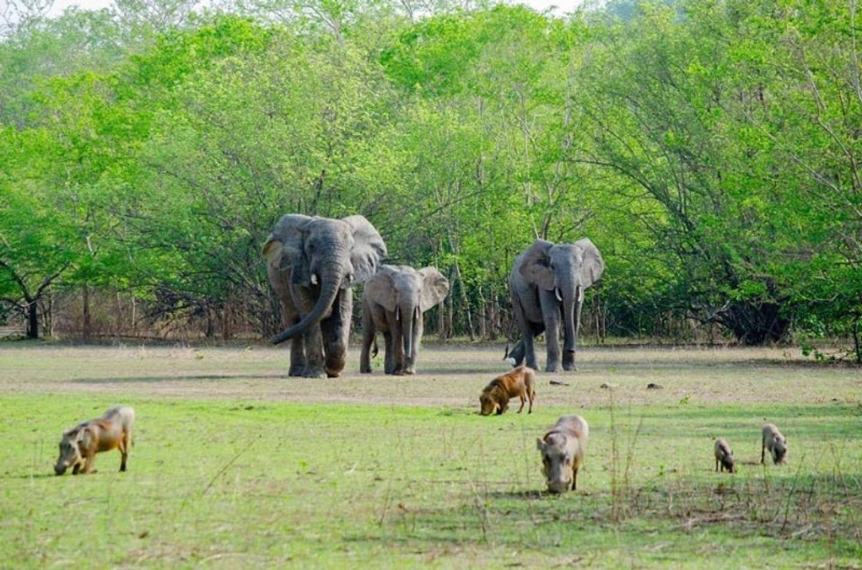 Safari Day Trip To Mole National Park