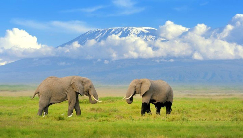 6 days Masai Mara /Lake Nakuru National Park Group tour