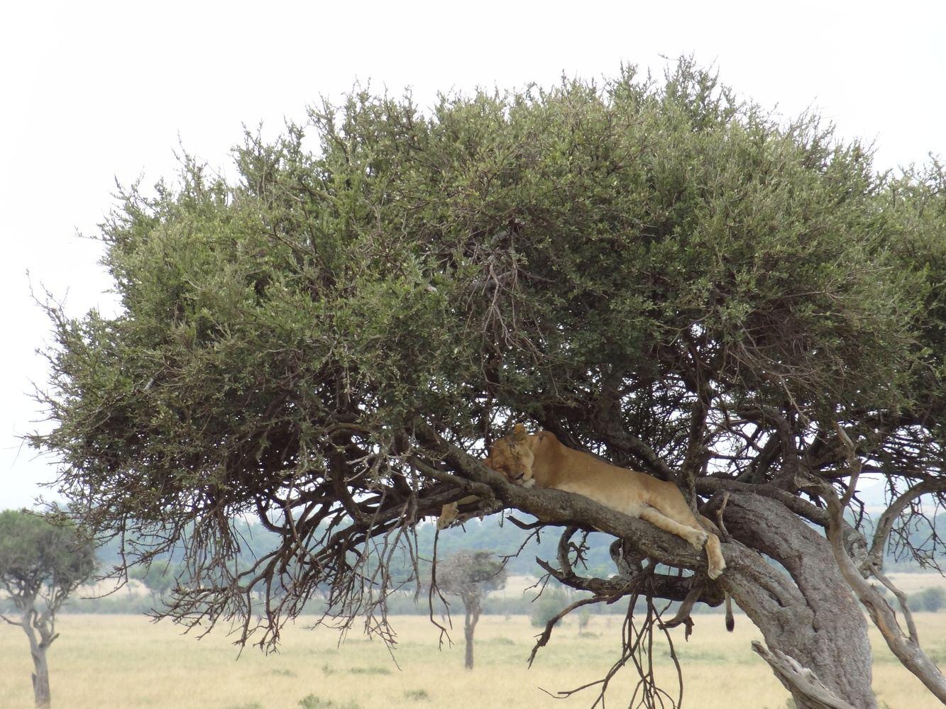 12-Days Best of Kenya Safari Delight