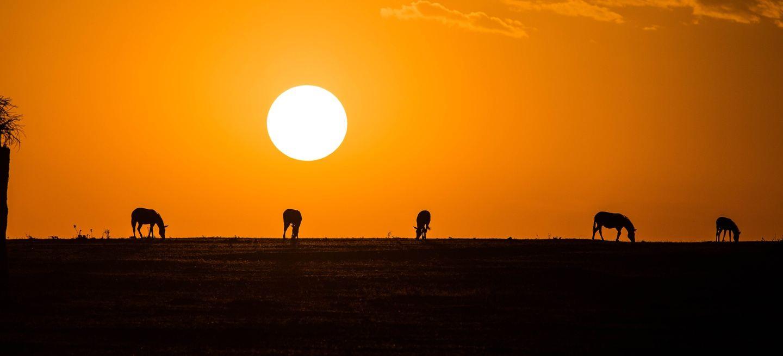 Best of Kenya Wildlife Safari - 09 Days