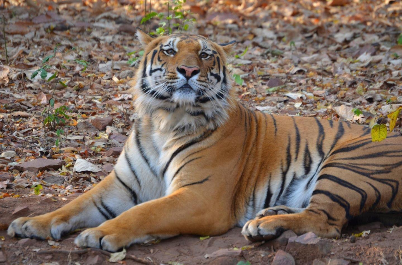 Safaris In Central India Tour From Mumbai