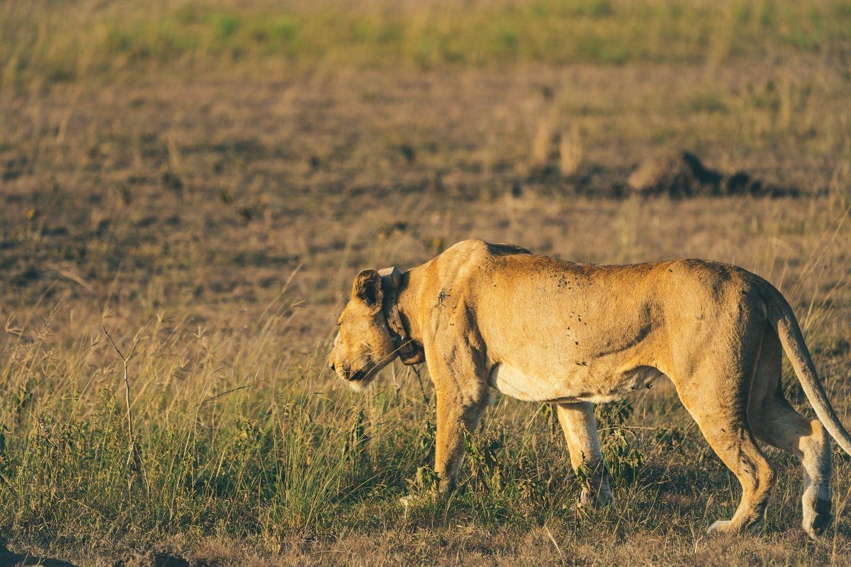 5 Day Maasai Mara National Reserve and Lake Naivasha, Kenya Safari