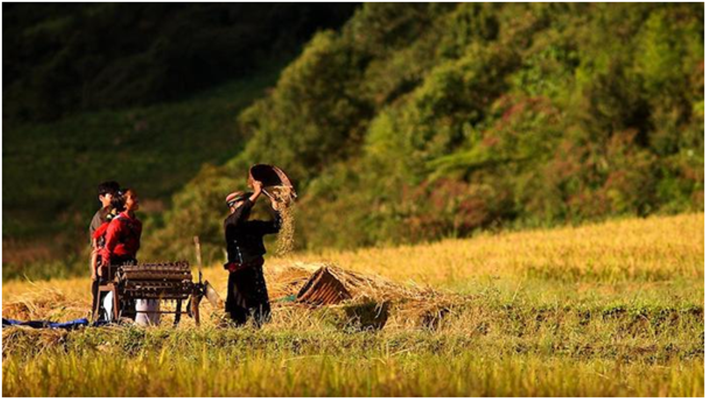 The 6 most beautiful rice fields in Vietnam
