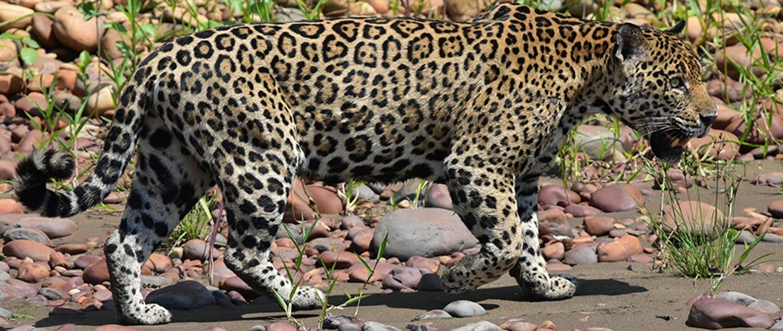 Pantanal photography tour, Brazil