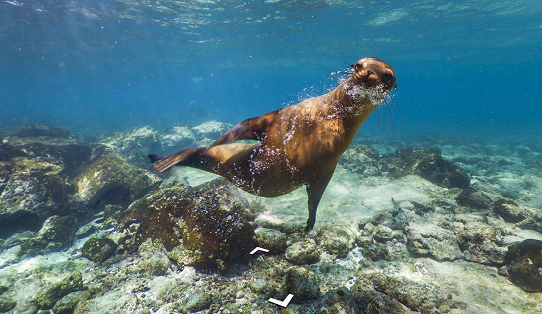 Galapagos Excursion