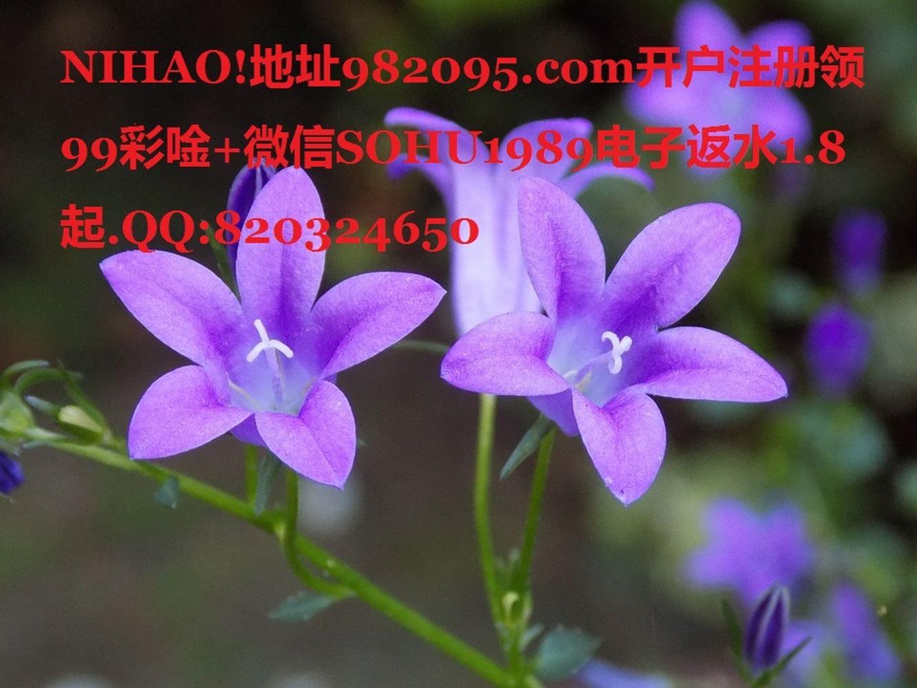NIHAO!地址982095.com开户注册领99彩唫+微信SOHU1989电子返水1.8起.QQ:820324650