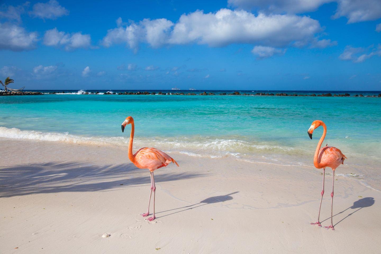 Spring Into Aruba 2020