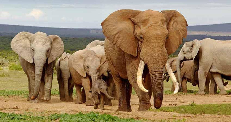 Big 7 South African wildlife tour