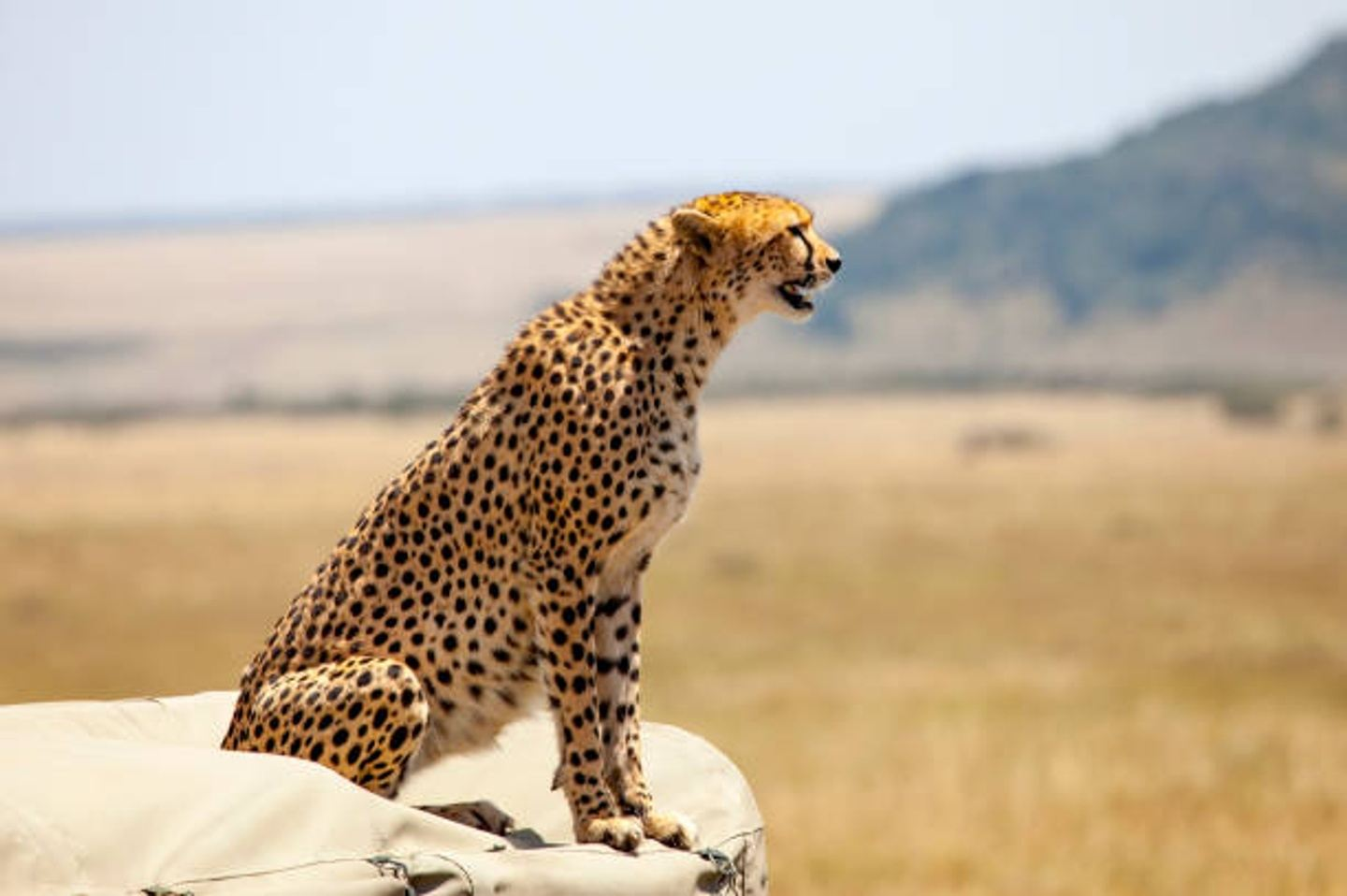6 DAYS GREAT TANZANIA NORTHERN-SERENGETI MIGRATION(DRIVE IN DRIVE OUT)