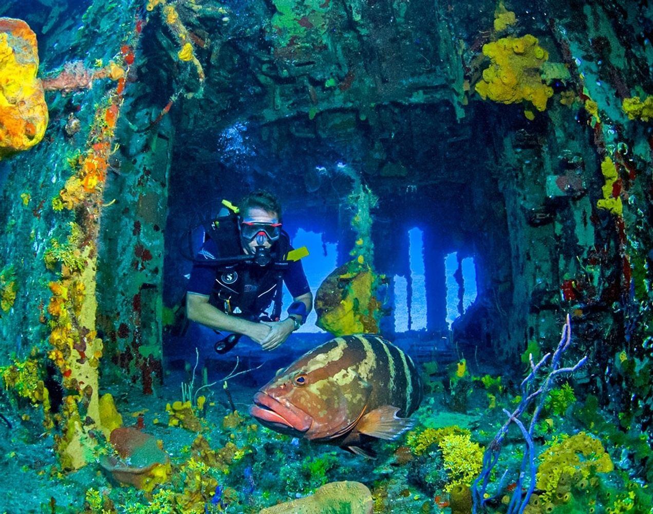 Marvelous Cayman Island Dive Trip