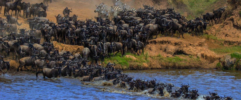 10 Days Serengeti Migration Safari