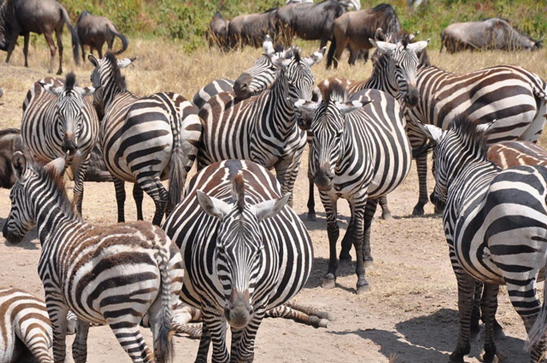 Tarangire|Serengeti|Ngorongoro Crater 2019