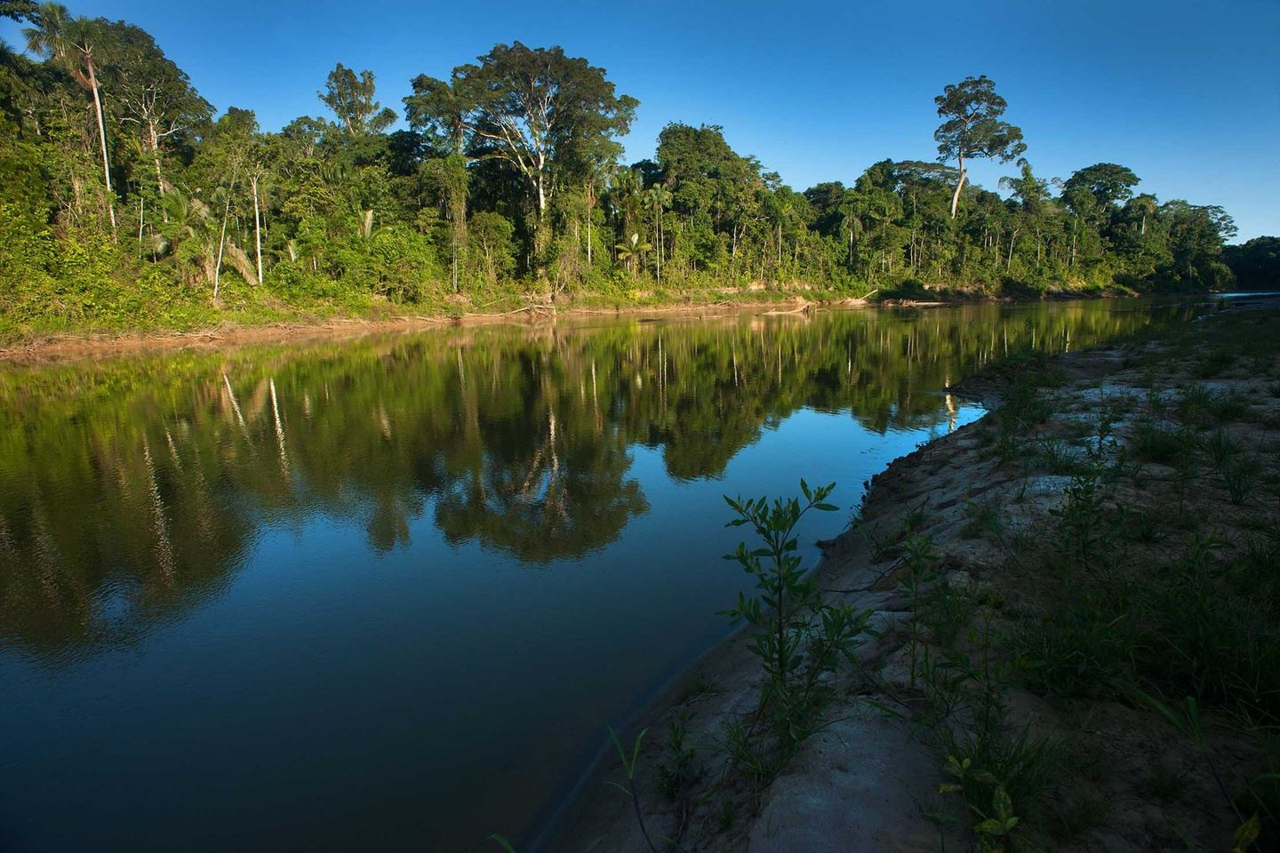 Birding in the South East Peruvian Amazon