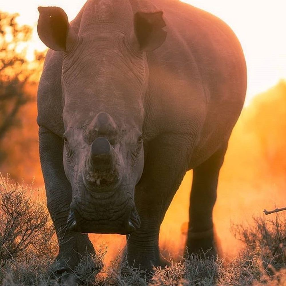 Two Week Rhino Conservation & Monitoring Volunteer Program