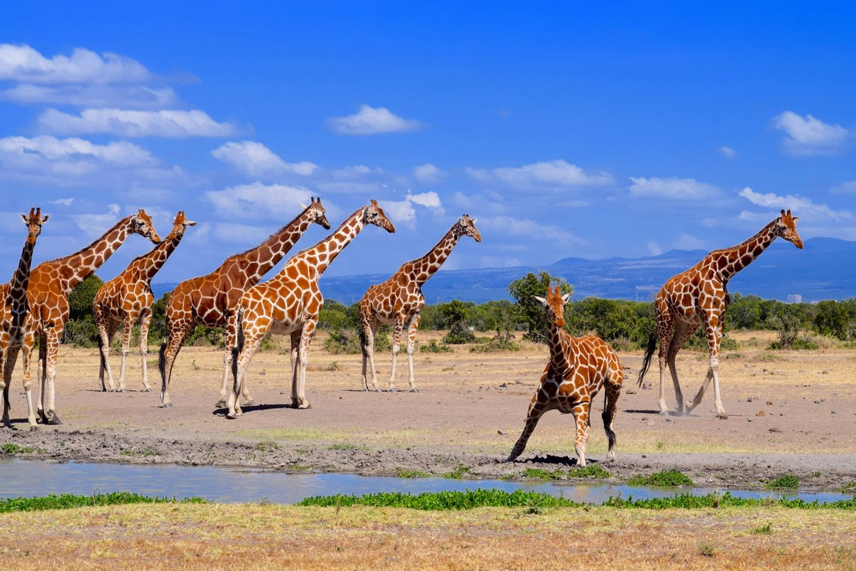 MedTreks Kenya Summer