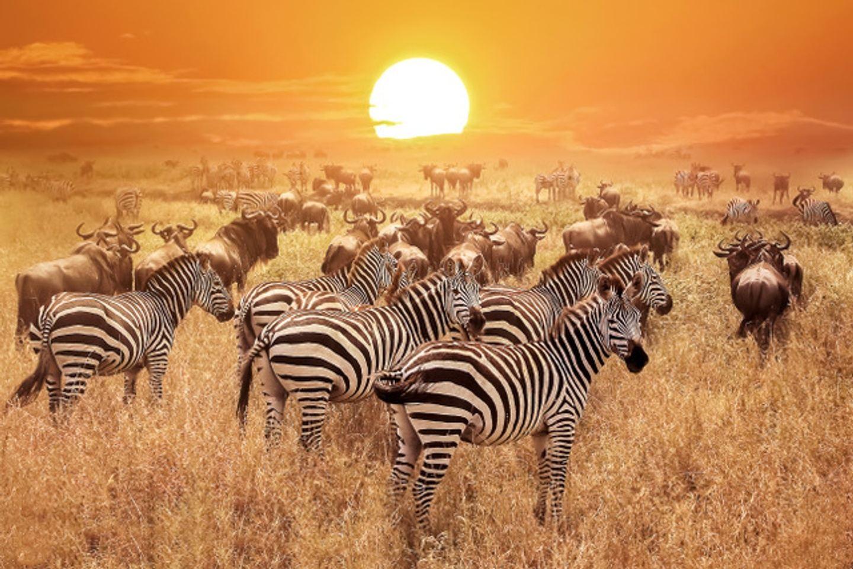 Tanzania, Yoga & Safari