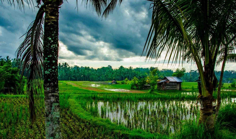 Bali Art & Soul: Nourishing the Body, Mind, Heart & Spirit