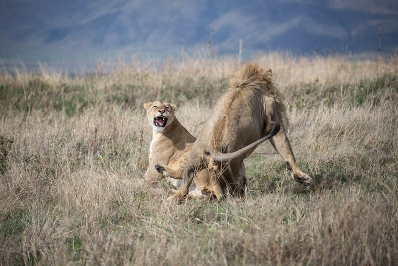Ngorongoro, Tarangire and Lake Manyara
