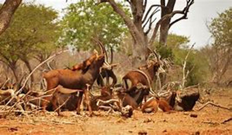 Full Day Botswana Safari & Accommodation