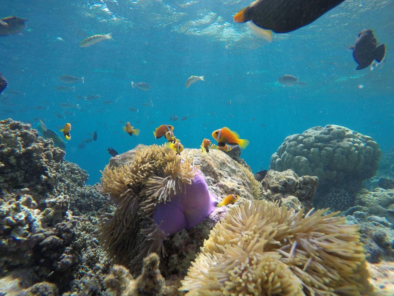 SUN, SEA AND MEMORIES IN MALDIVES