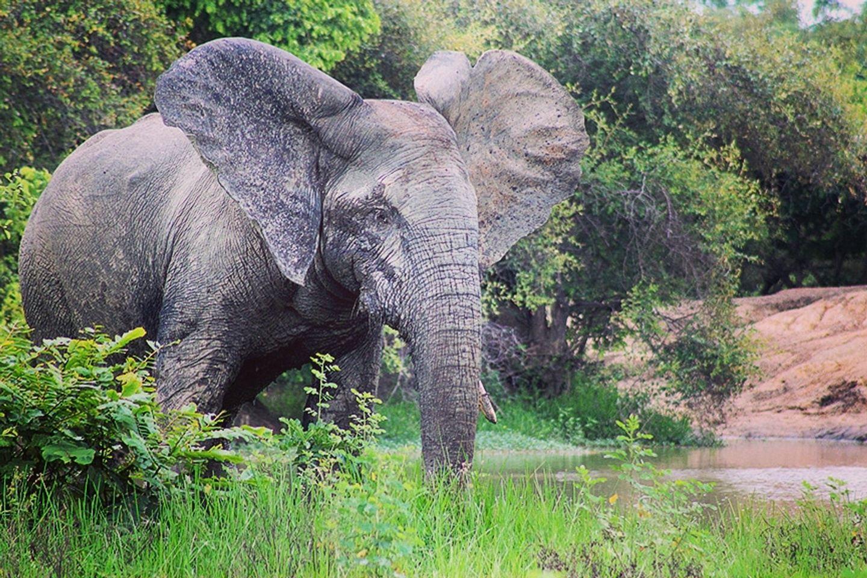 12 Days Wildlife Eco-Adventure Trip