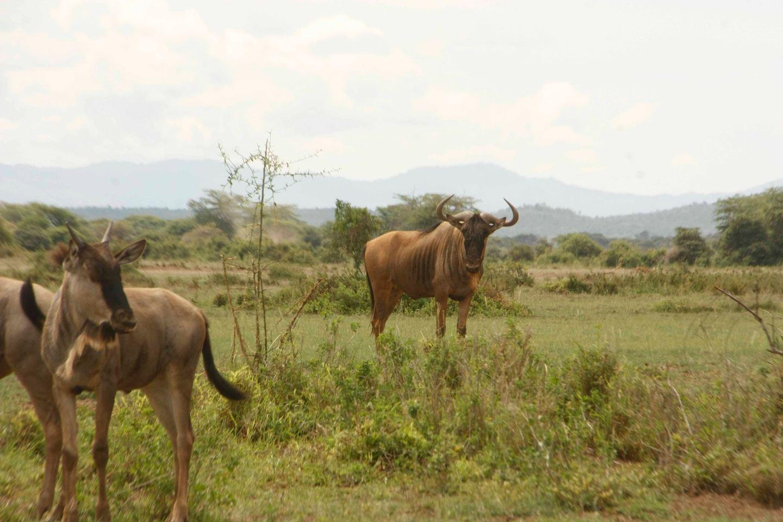 3 Days Masai Mara Budget camping safari.