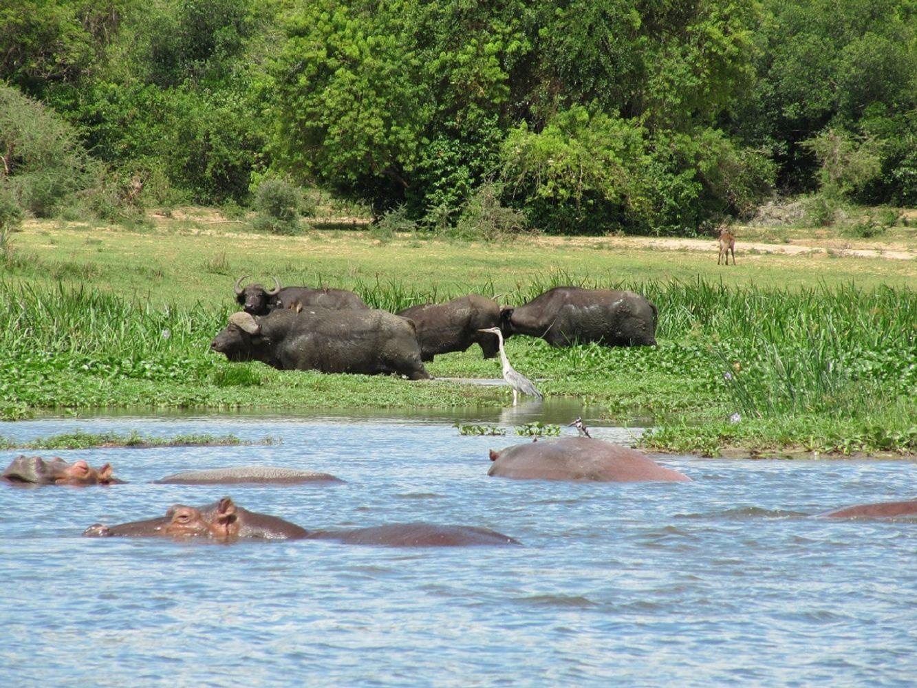 4 Days Wildlife Safari in Uganda